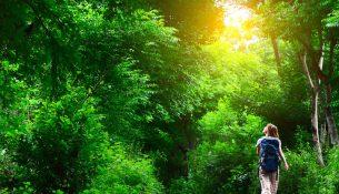walking-nature-150629
