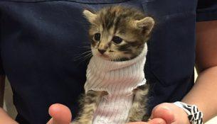 161012130016-kitten-sweater-trnd-3-exlarge-169