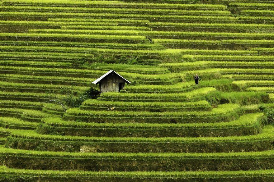 vietnami-libri-0002