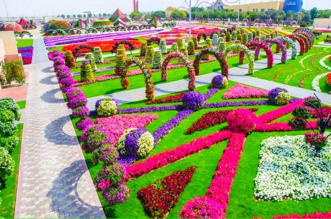 Dubai-Miracle-Garden-341