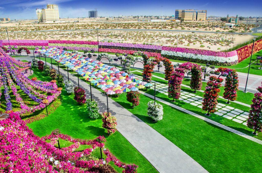 Miracle-Garden-Dubai-3
