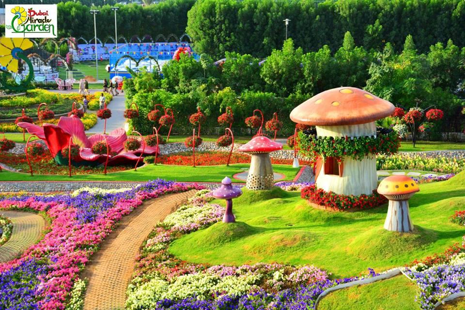 miracle-garden-dubai-1